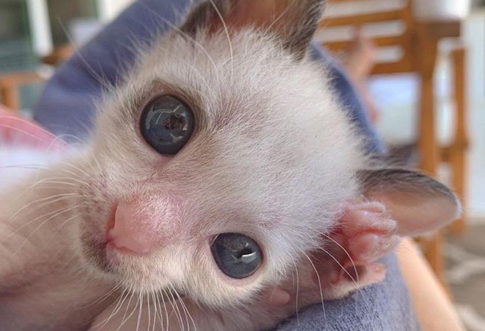 small kitten, big blue eyes