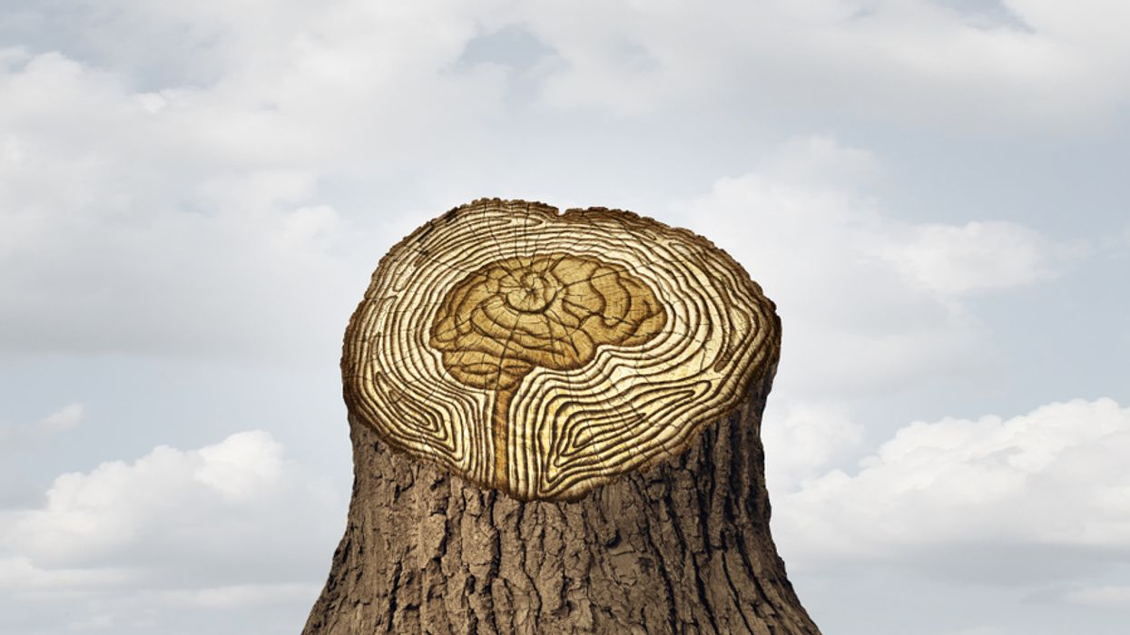 concept of cognitive function in old age brain carved in tree trunk