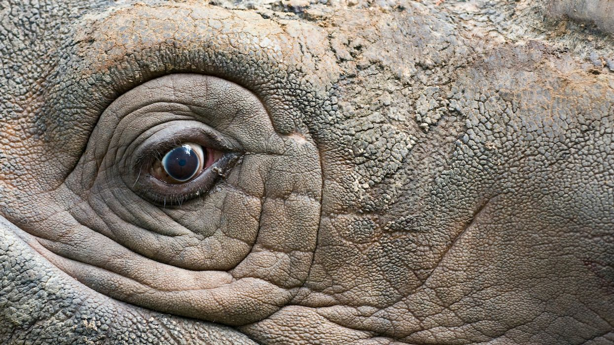 Sixth Mass Extinction Accelerating, Study of Land Animals Finds