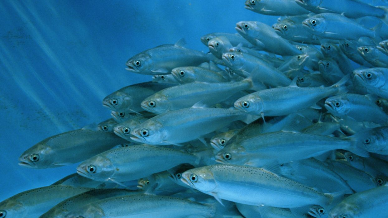 How Innovation Is Driving the Blue Economy