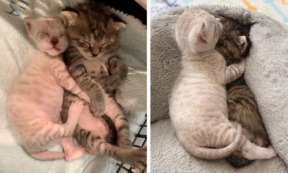 cuddles, hugs, cute kittens, best friends