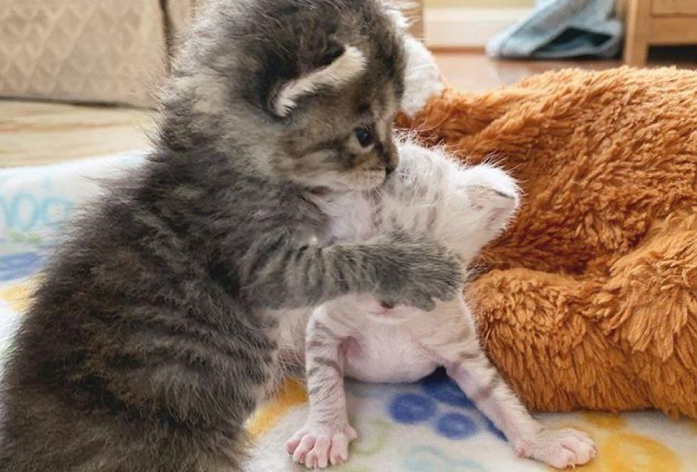 playful, cute kittens