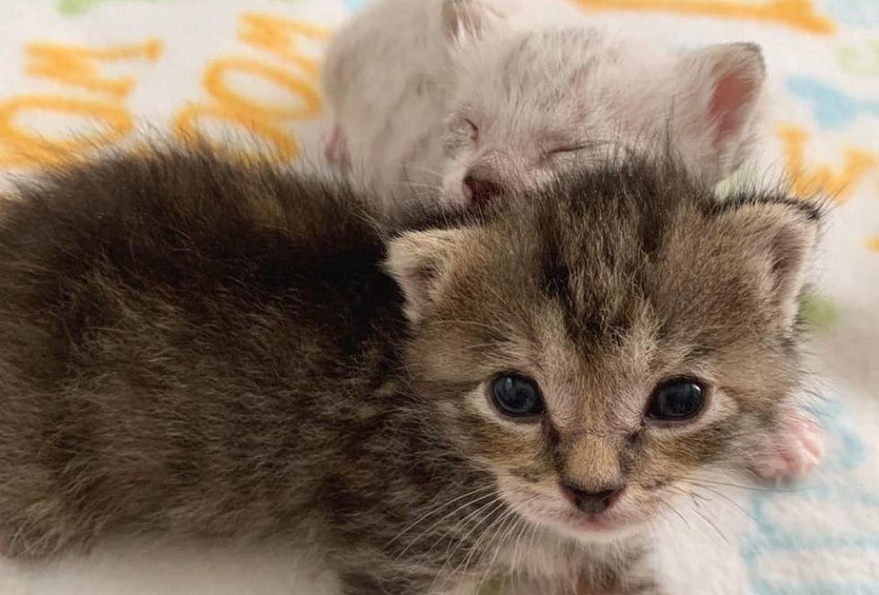 best friends, bond, kittens
