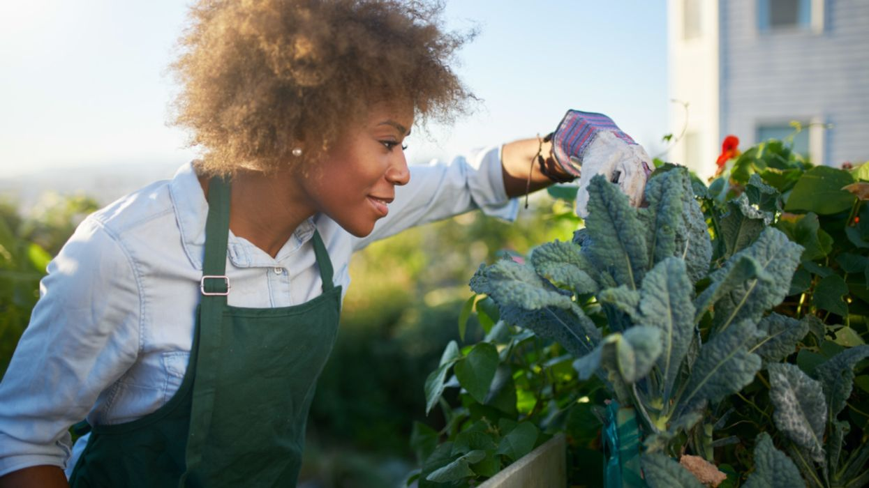 19 Individuals and Organizations Building Stronger Black Communities and Food Systems