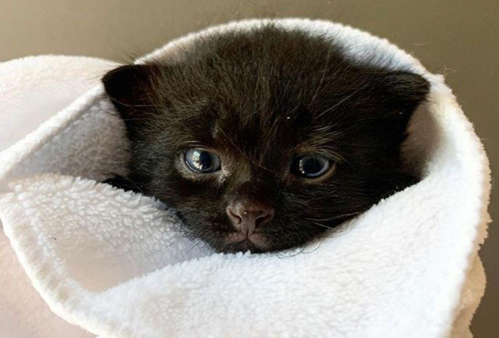 purrito, cute kitten