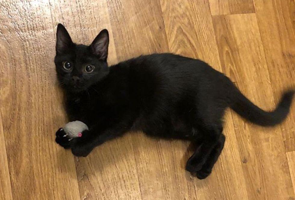 big eyes, cute kitten, panther kitty