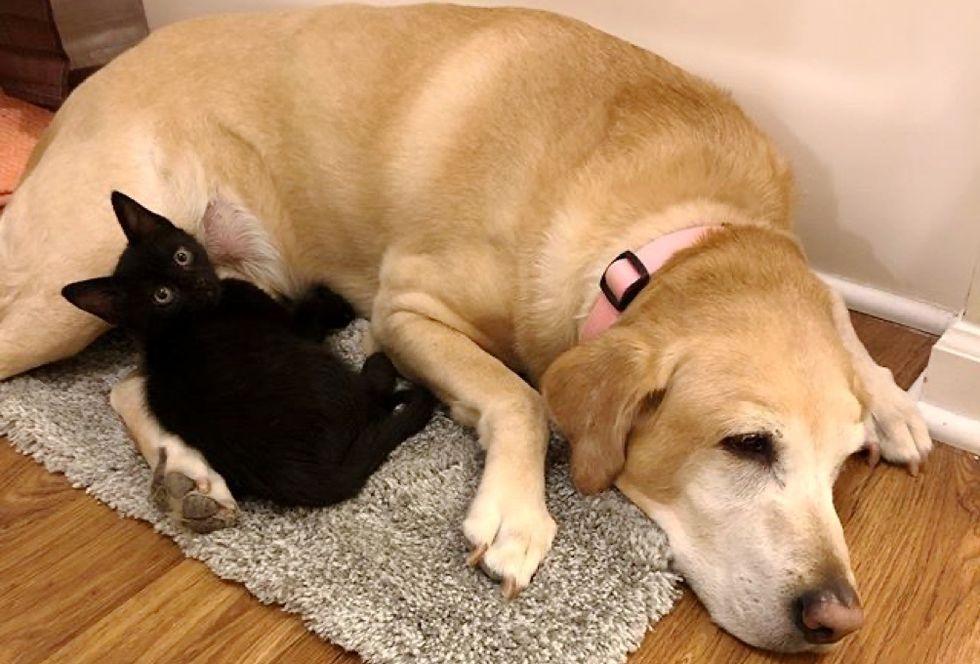 kitten, snuggles, senior dog