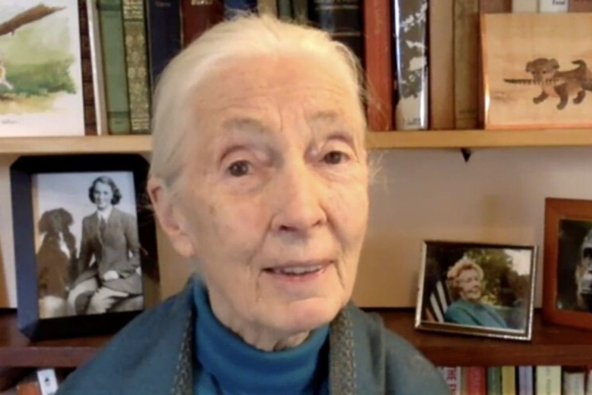 Jane Goodall: Humanity will be 'finished' after Covid-19 unless we change our ways
