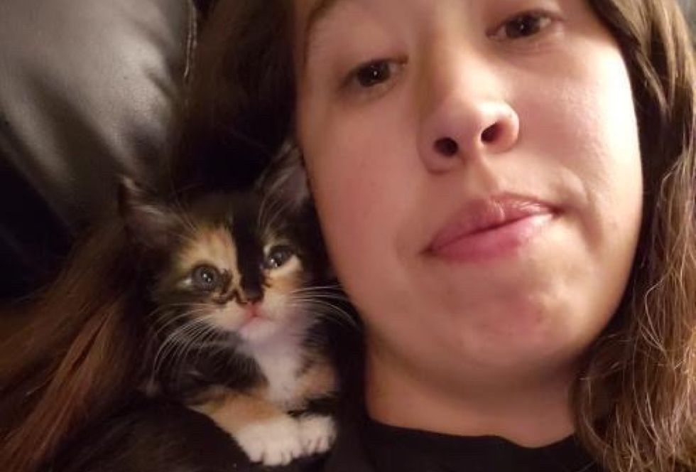 calico kitten, shoulder kitten, cuddles