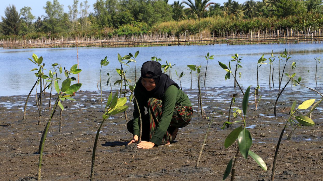 Mangroves Threatened by Sea Level Rise Could Disappear by 2050