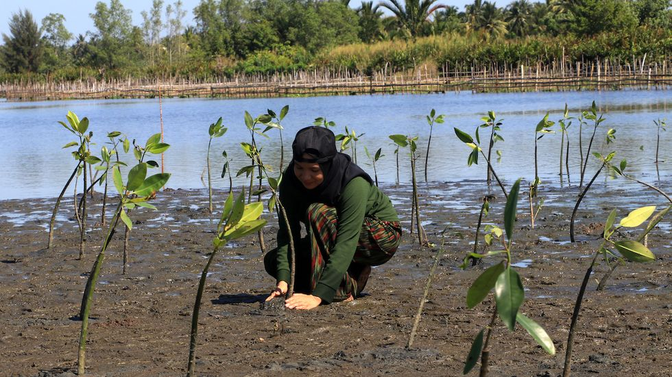 Mangroves Threatened by Sea Level Rise Could Disappear by 2050 ...
