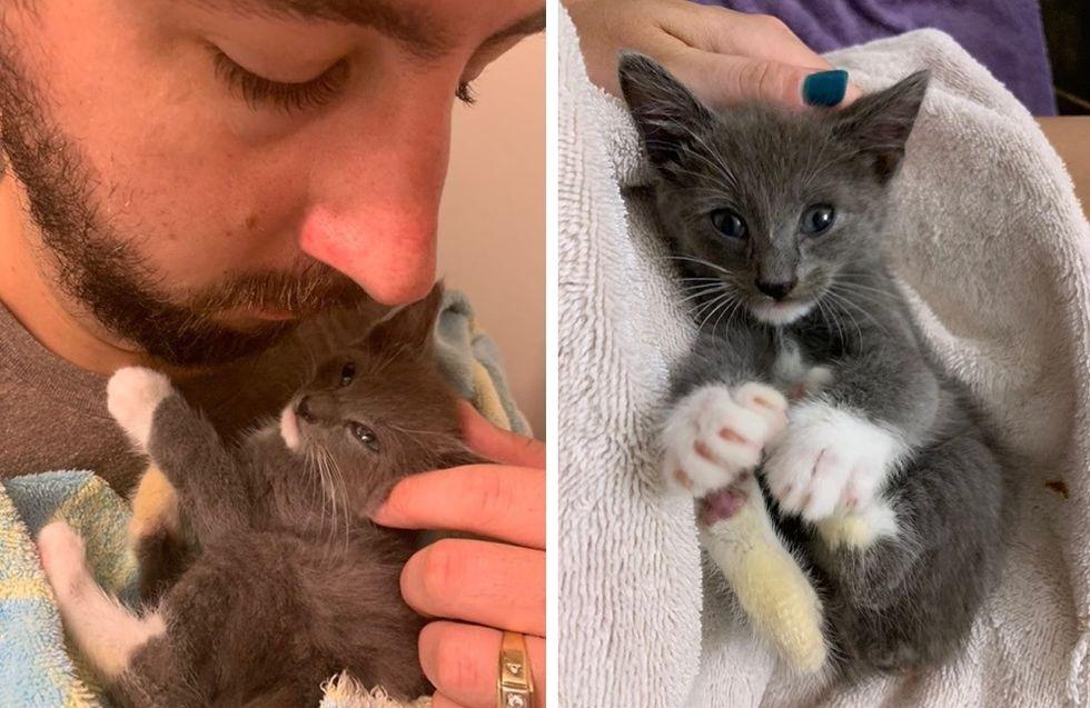 cuddles, cute kitten