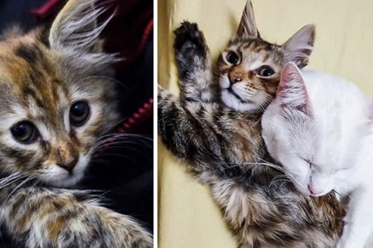 Family Tried to Find Kitten a Home But Their Cat Had Another Idea