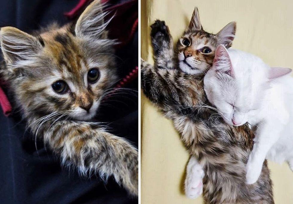 kitten, stray, cuddles, cat