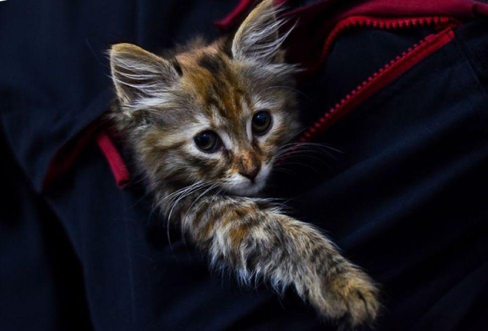 kitten, tucked in, cute