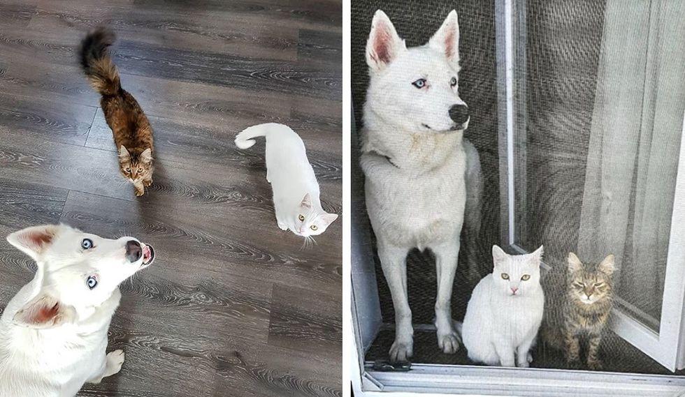 dog, cat, kitten, best friends