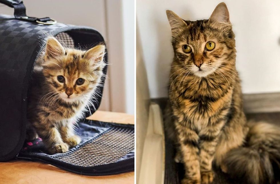 tabby cat, kitten, then and now