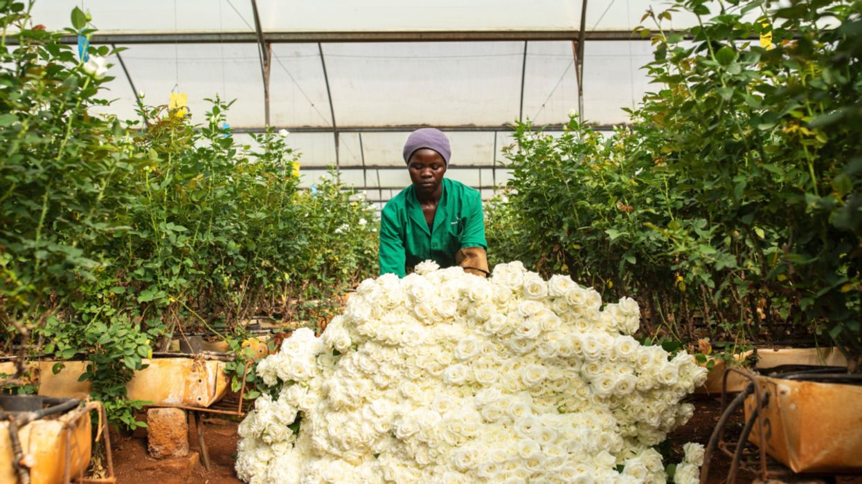 COVID-19 Is Hurting Kenyan Horticulture Exports