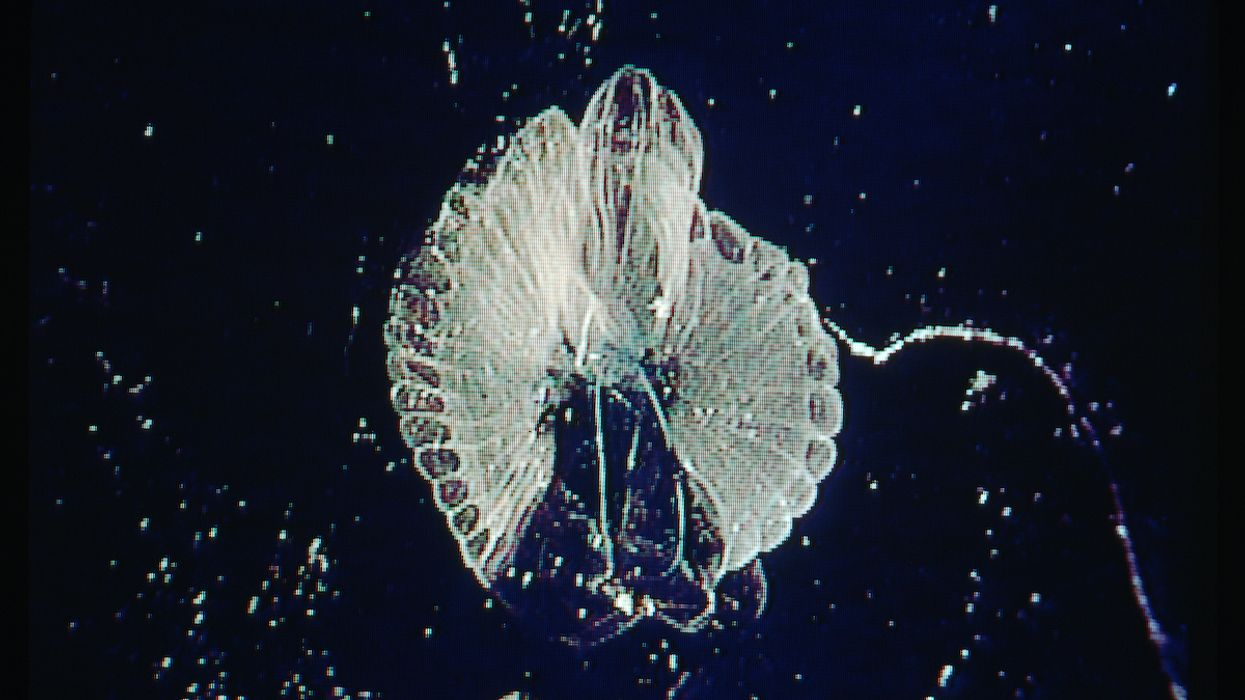 Extraordinary Ocean Creatures Use Mucus to Help Remove Carbon and Microplastics