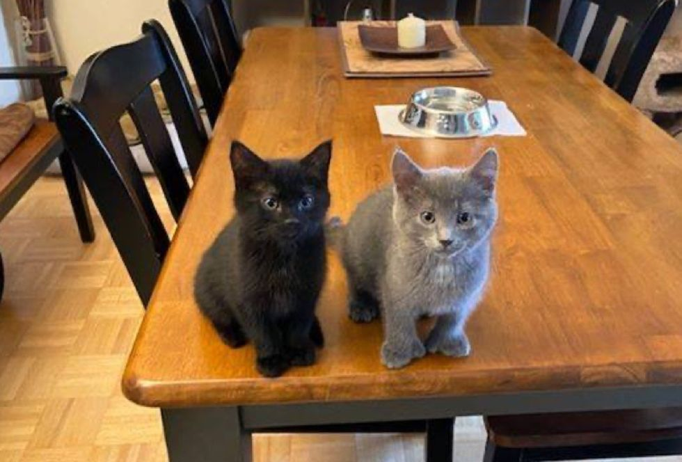 cute kittens, table
