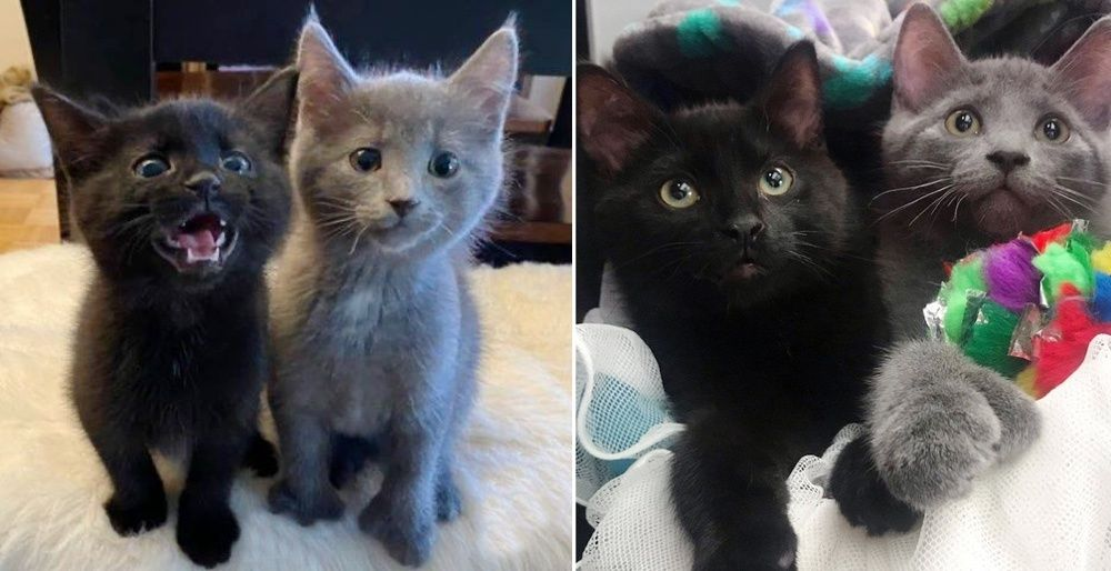 Kittens Found Outside Together Have Their Dream Come True