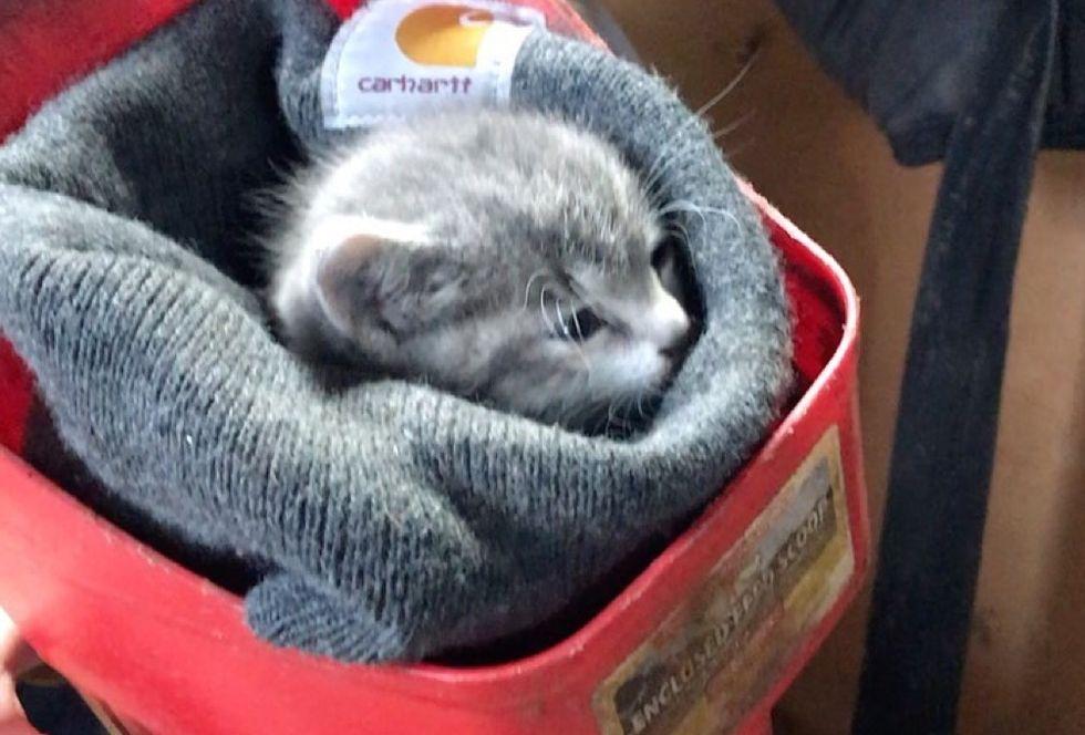 kitten, barn, cuddles, purrito