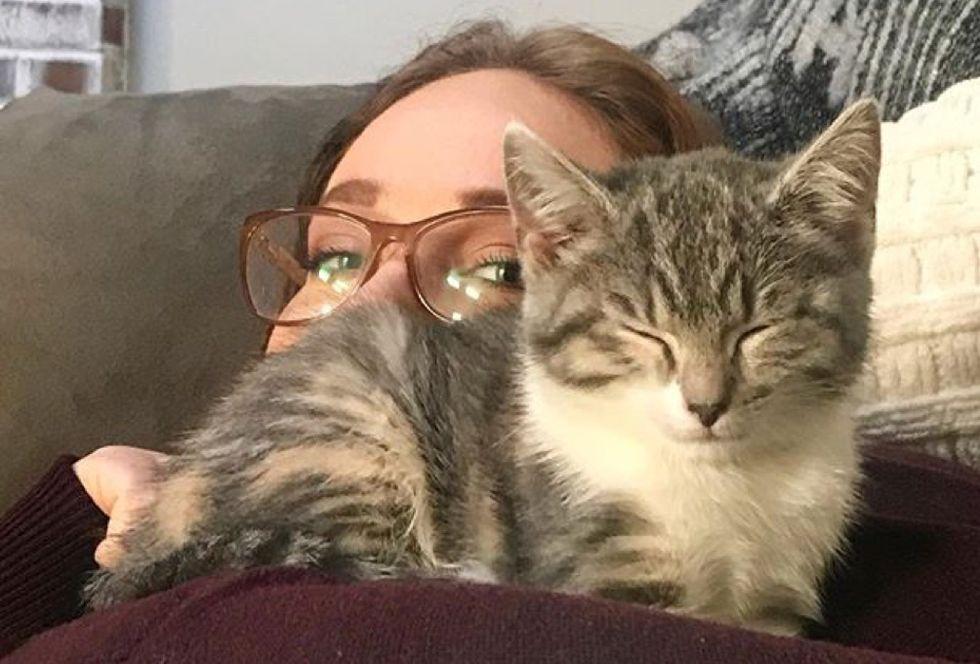 cuddles, cute kitten, sleepy