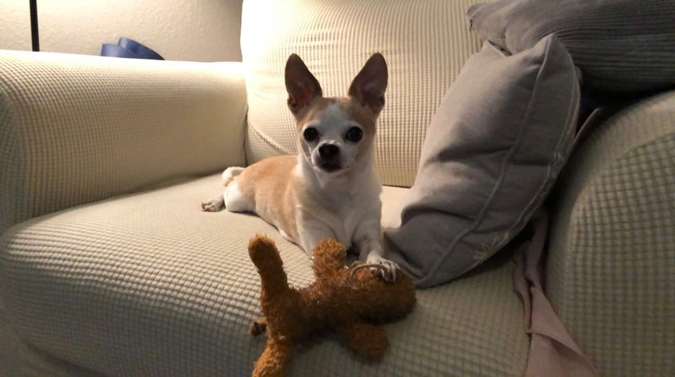 Meet My *Shared* Dog: Chip, A Chihuahua Who Lives in Scottsdale, Arizona
