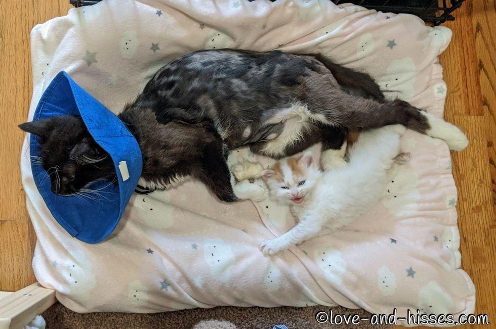 cuddles, kitten, cat mom
