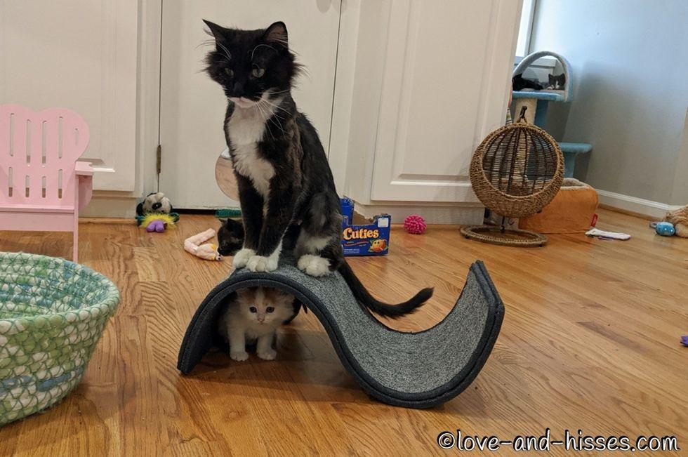 hide and seek, kitten, cat