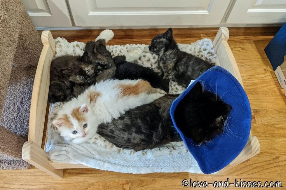 cuddle puddle, kittens