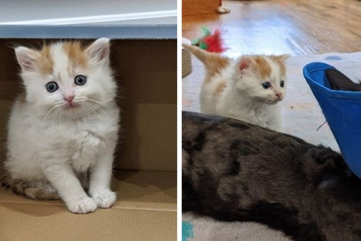 Kitten Befriends Cat and Makes it His Mission to Win Her Over