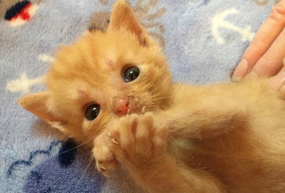 ginger kitten, paws
