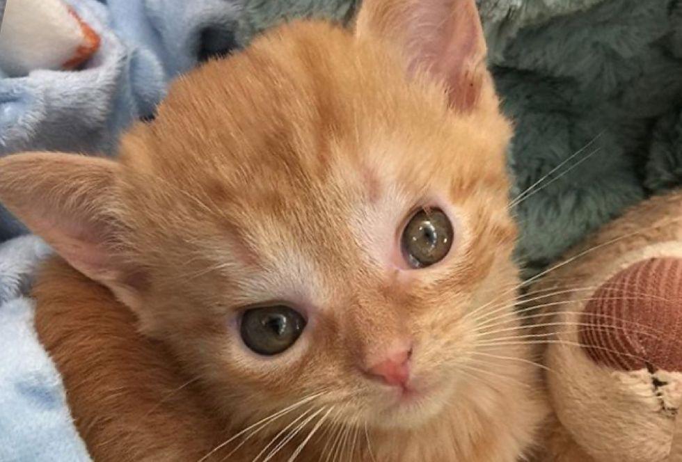 kitten, hydrocephalus