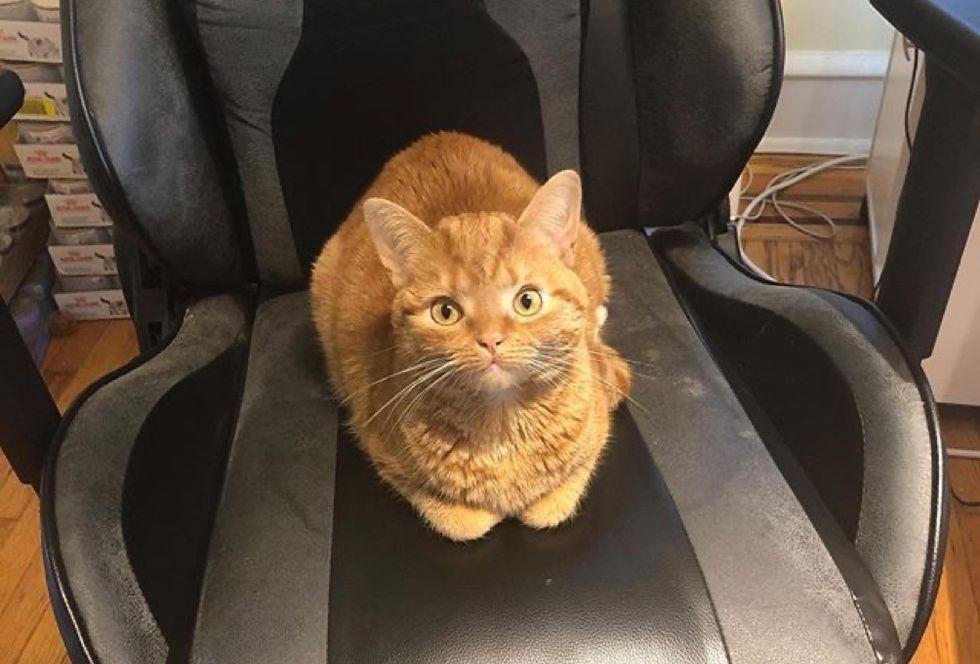 office cat, ginger