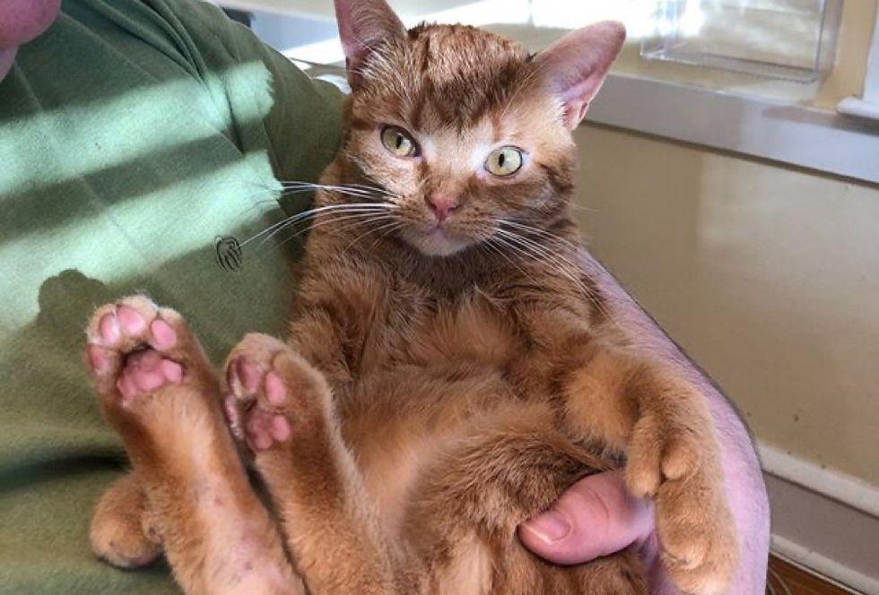 cuddle, ginger cat