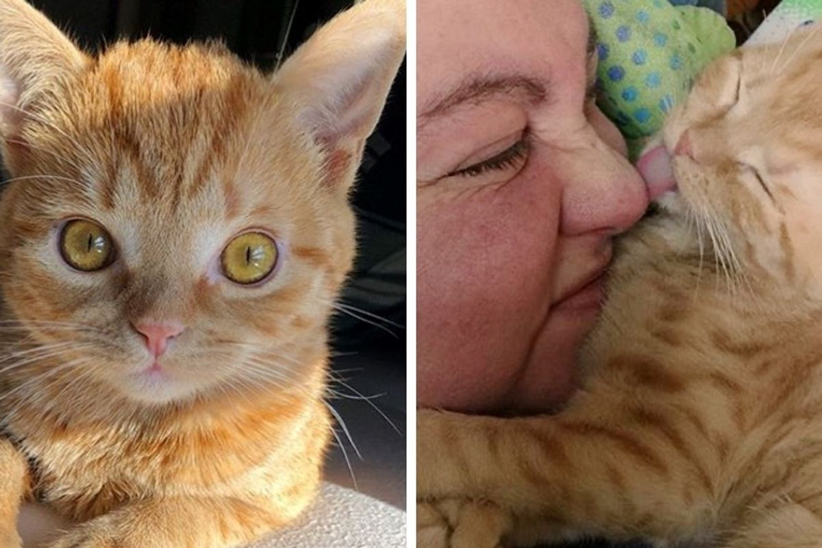 Kitten with Extra Toes and Strong Will Found the Perfect Place to Call Home