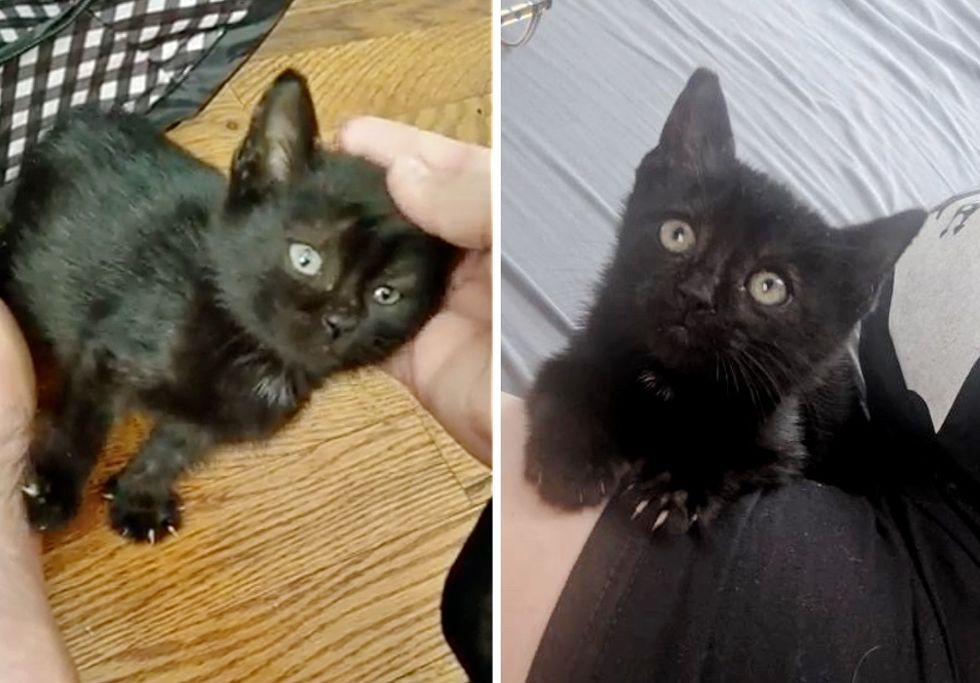 stray kitten, black kitten, cuddles