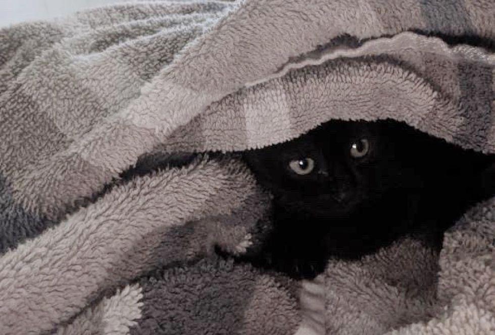 kitten, hiding, shy