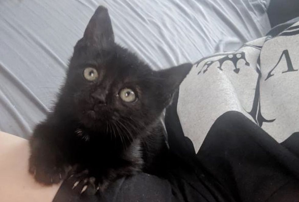 cute kitten, black kitten