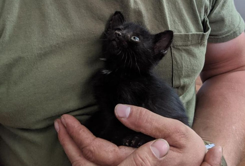 cuddly kitten, palm-sized kitty