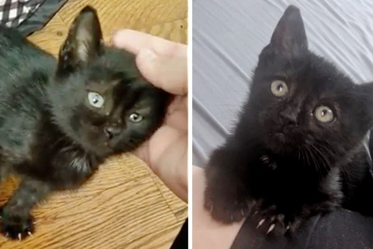 Stray Kitten Found Hiding in Woodpile is So Happy to Get Help
