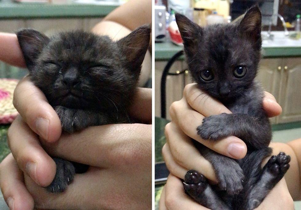 cute kitten, cuddles