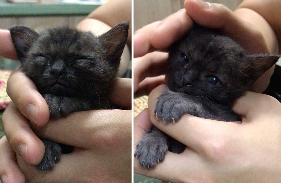 cute kitten, cuddles, toothless