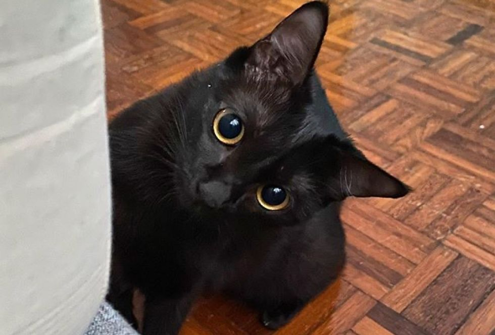 toothless, panther kitty, cute cat