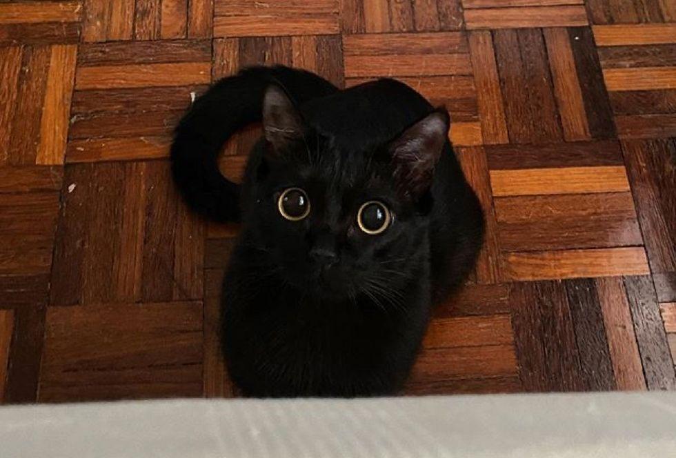 toothless, eyes, panther kitty, kitten, cat