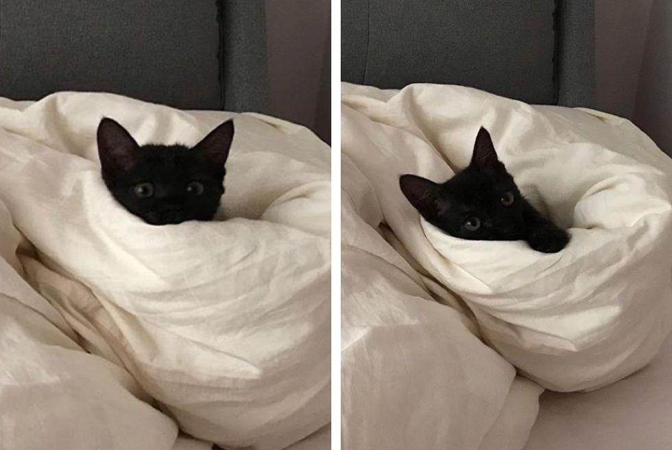 kitten, peekaboo, bed
