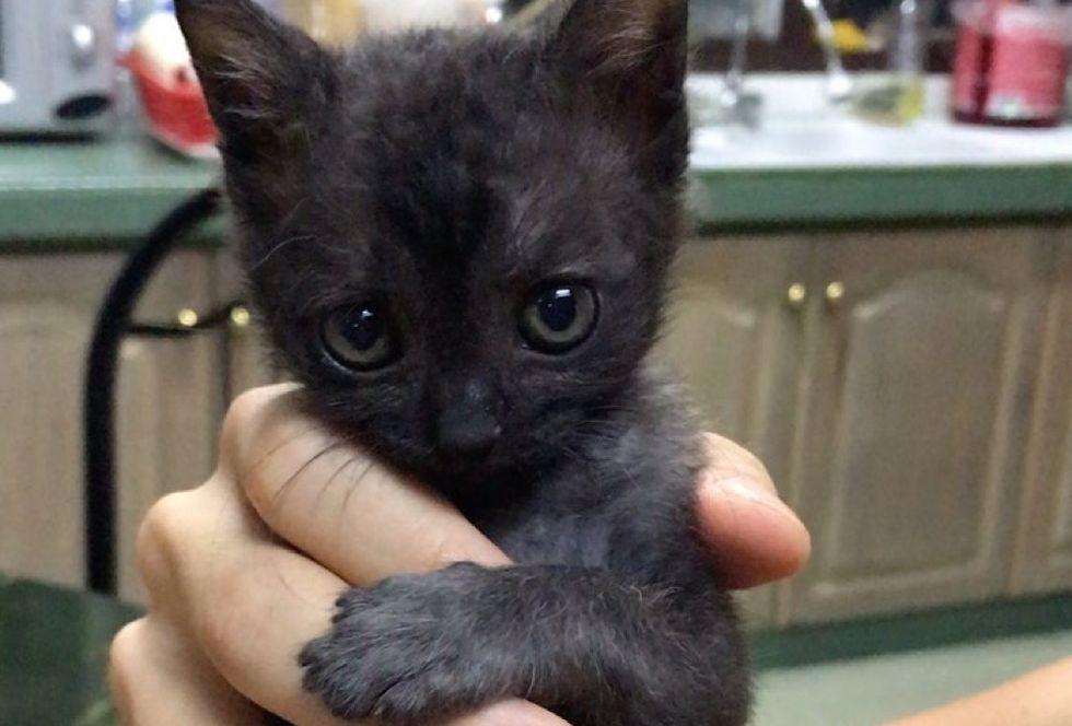 cute kitten, toothless
