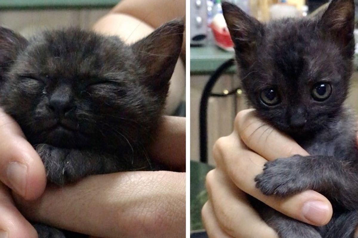 Kitten Found in Alley Cuddles Her Way into Family's Heart