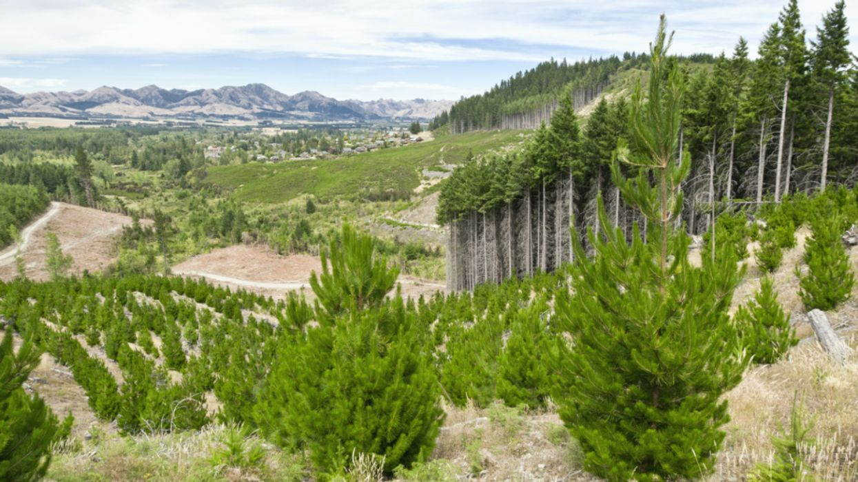Planting Non-Native Trees Accelerates Carbon Release Back Into the Atmosphere
